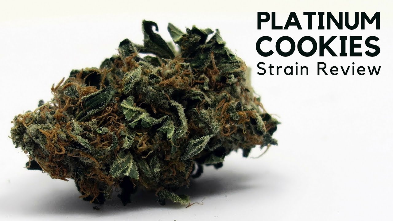 platinum girl scout cookies strain information   ismoke