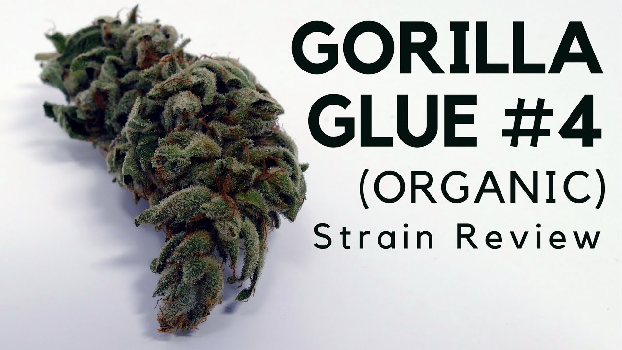 Gorilla Glue #4 Cannabis Strain Information & Review - ISMOKE
