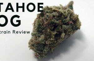 Tahoe OG Cannabis Strain