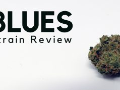 Blues Cannabis Strain Review