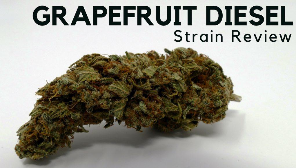 Grapefruit Diesel
