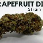 Grapefruit Diesel Cannabis Strain Information