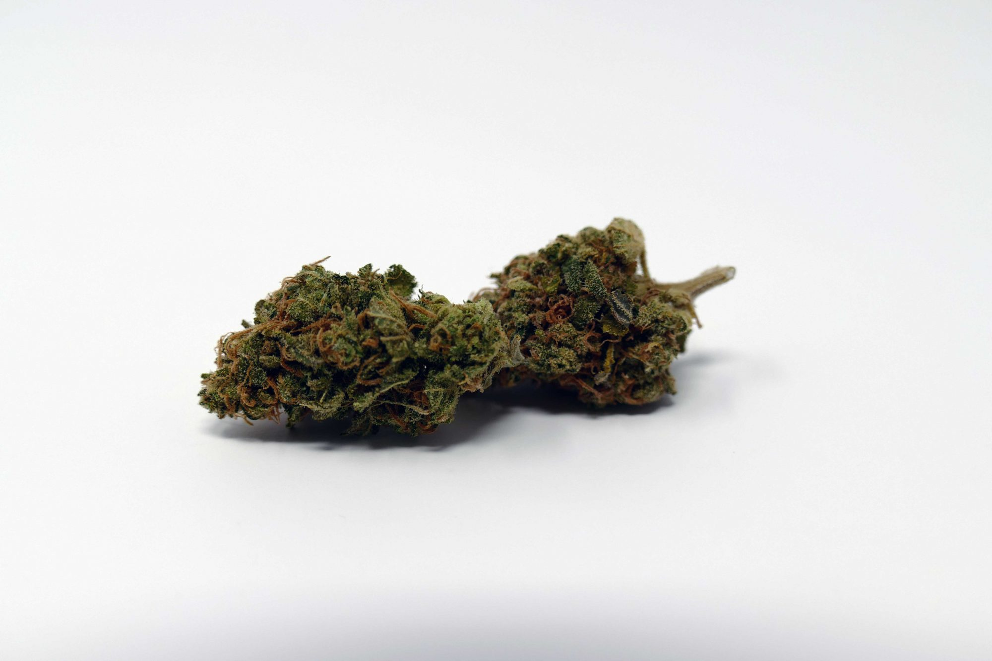 Critical Plus, Critical Plus 2.0 Cannabis Strain Information & Review