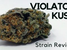 Violator Kush Cannabis Strain Review