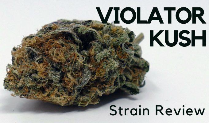 Violator Kush Cannabis Strain Review