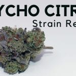 Psycho Citrus Cannabis Strain Information & Review